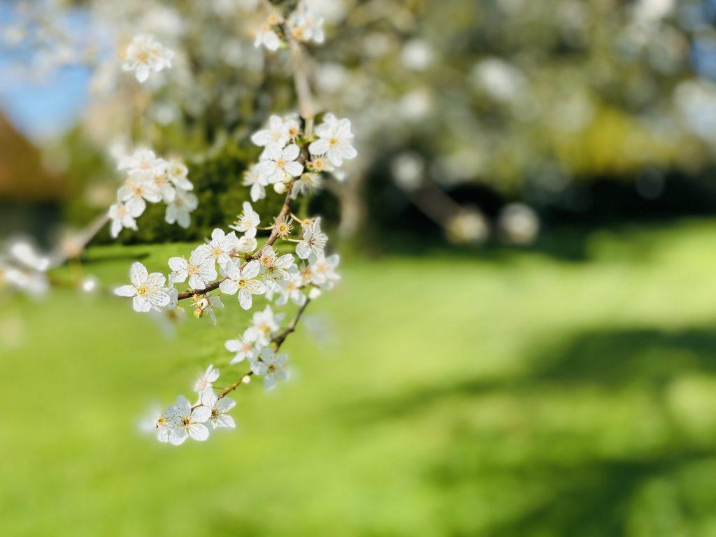 fleur blanche 2